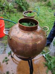 douglas fir distillation